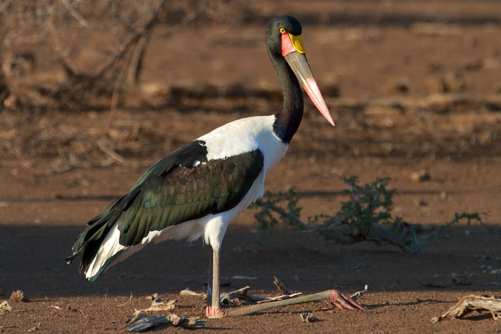 T_Steffens_Birds 4.jpg