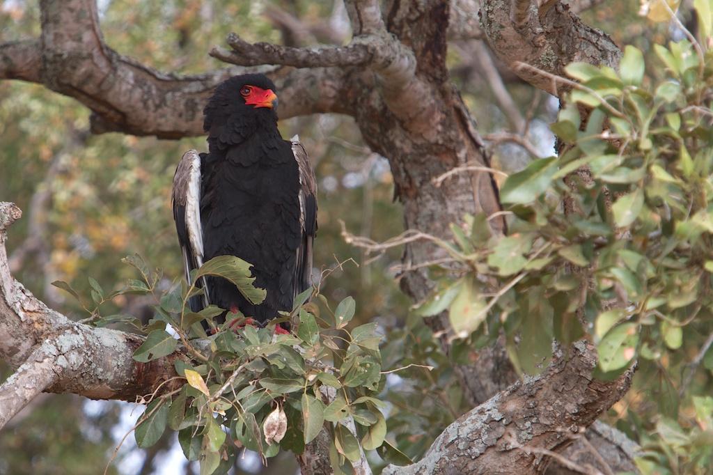 T_Steffens_Birds 6.jpg
