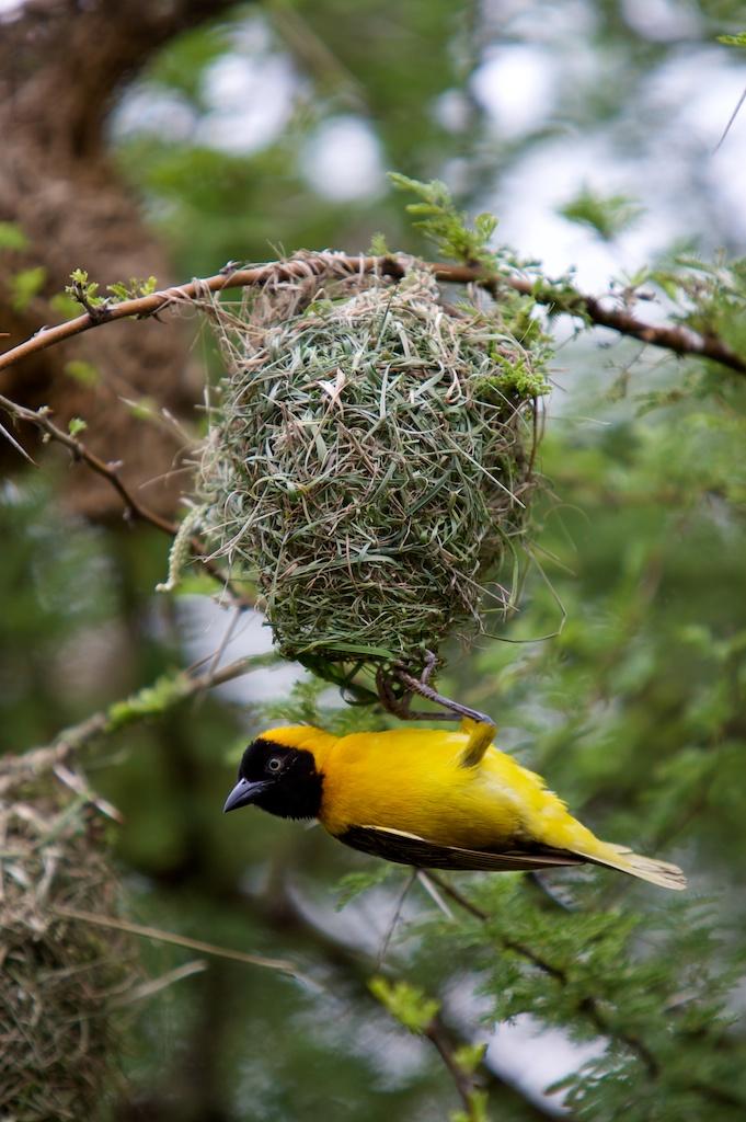 T_Steffens_Birds 9.jpg