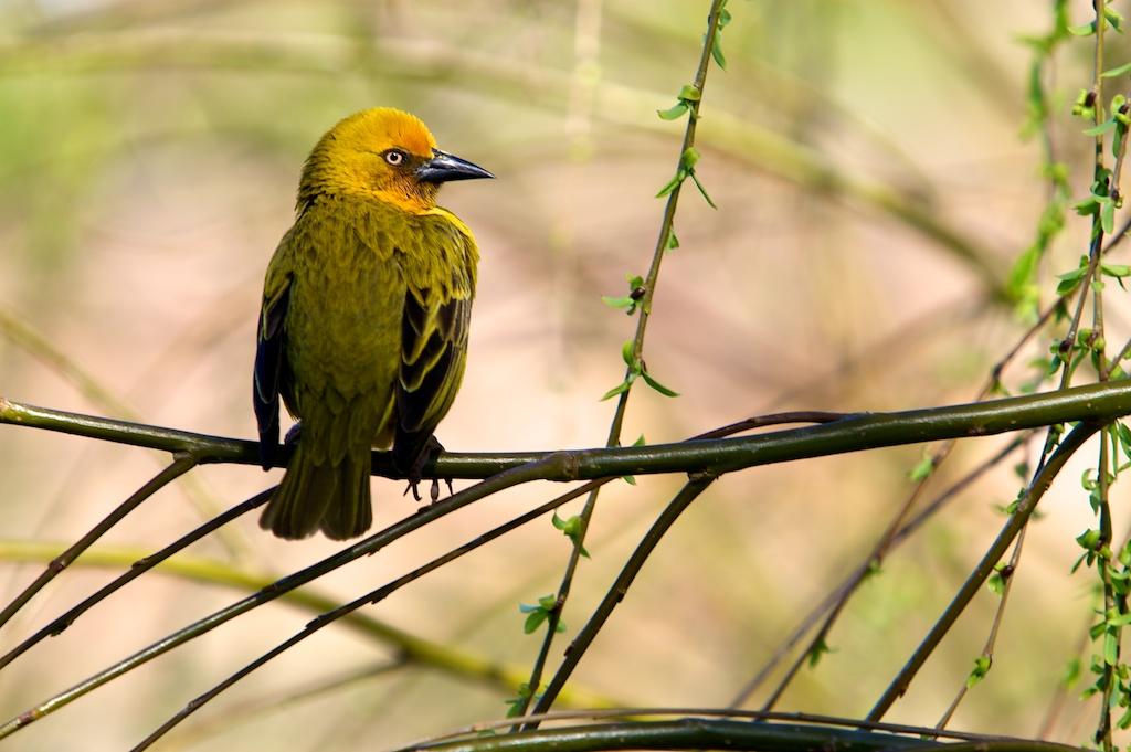 T_Steffens_Birds 10.jpg