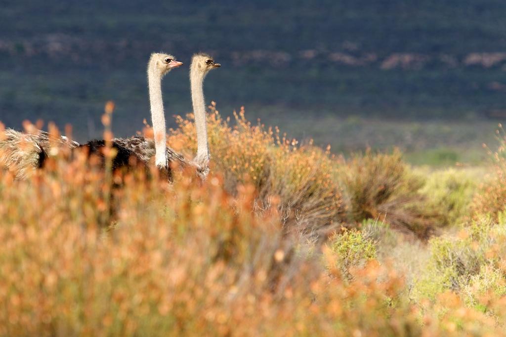 T_Steffens_Birds 14.jpg