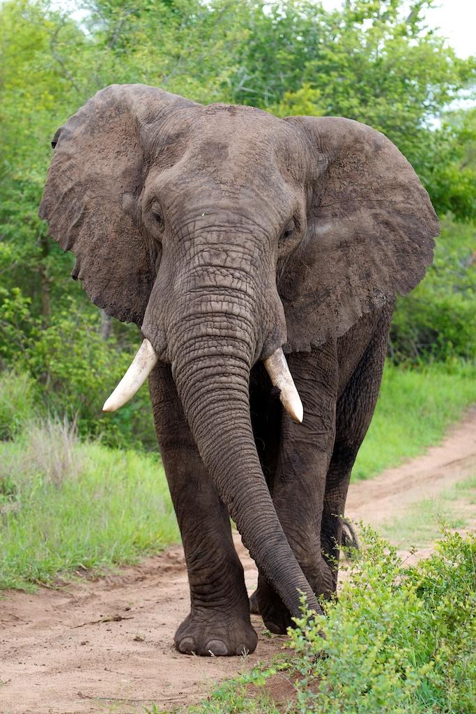 T_Steffens_elephants 5.jpg