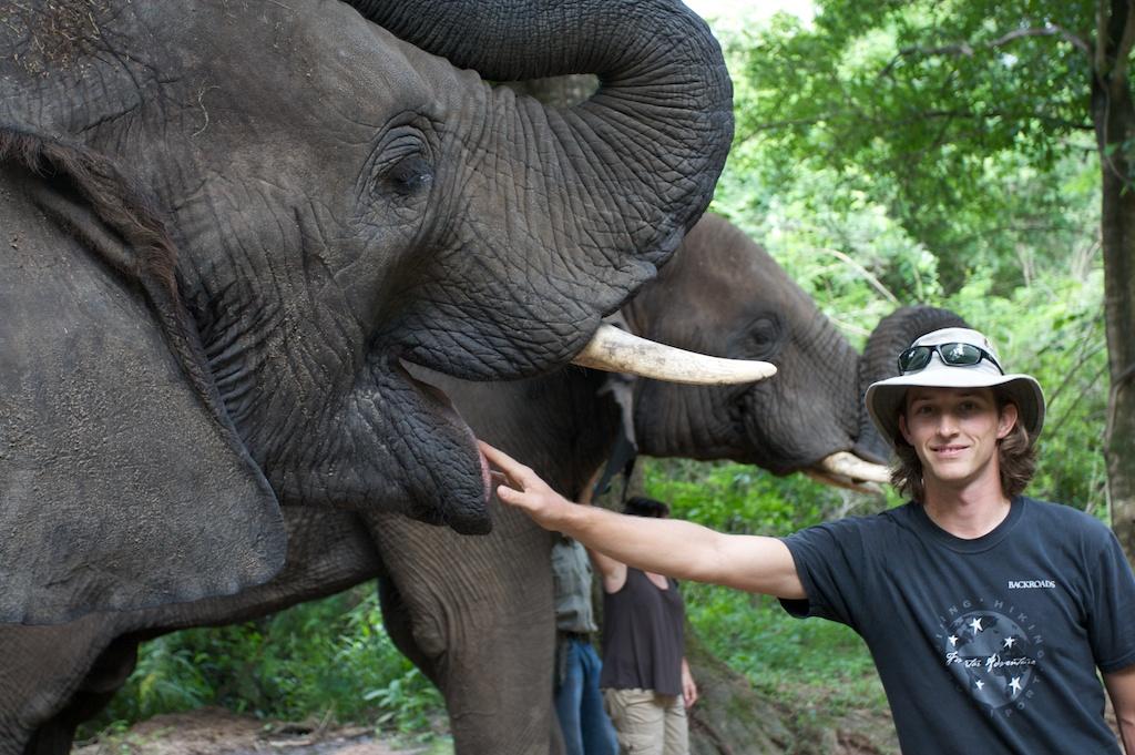T_Steffens_elephants 8.jpg