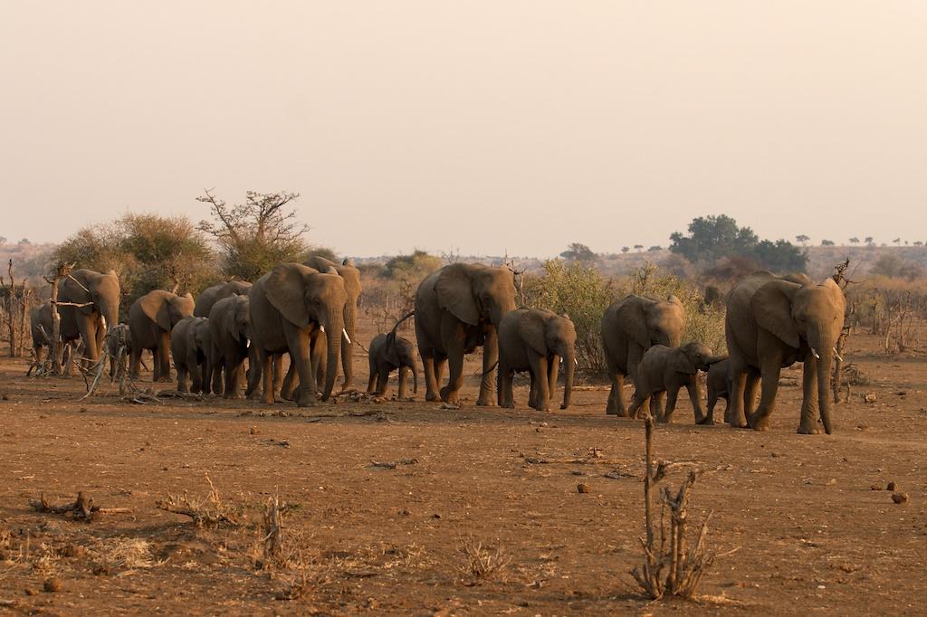 T_Steffens_elephants 9.jpg
