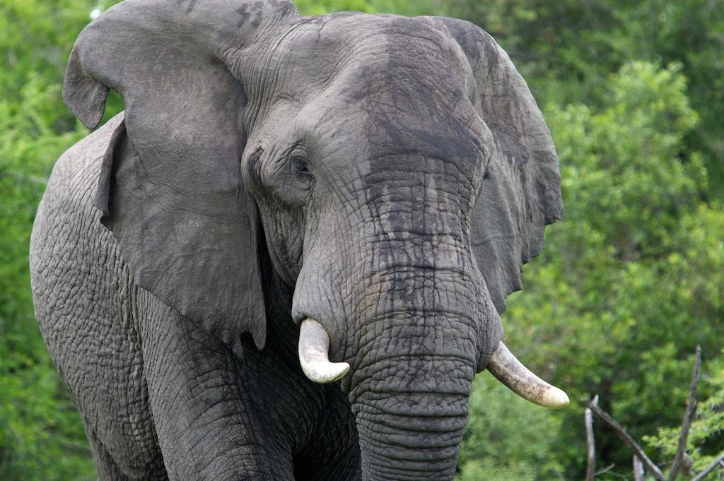 T_Steffens_elephants 14.jpg