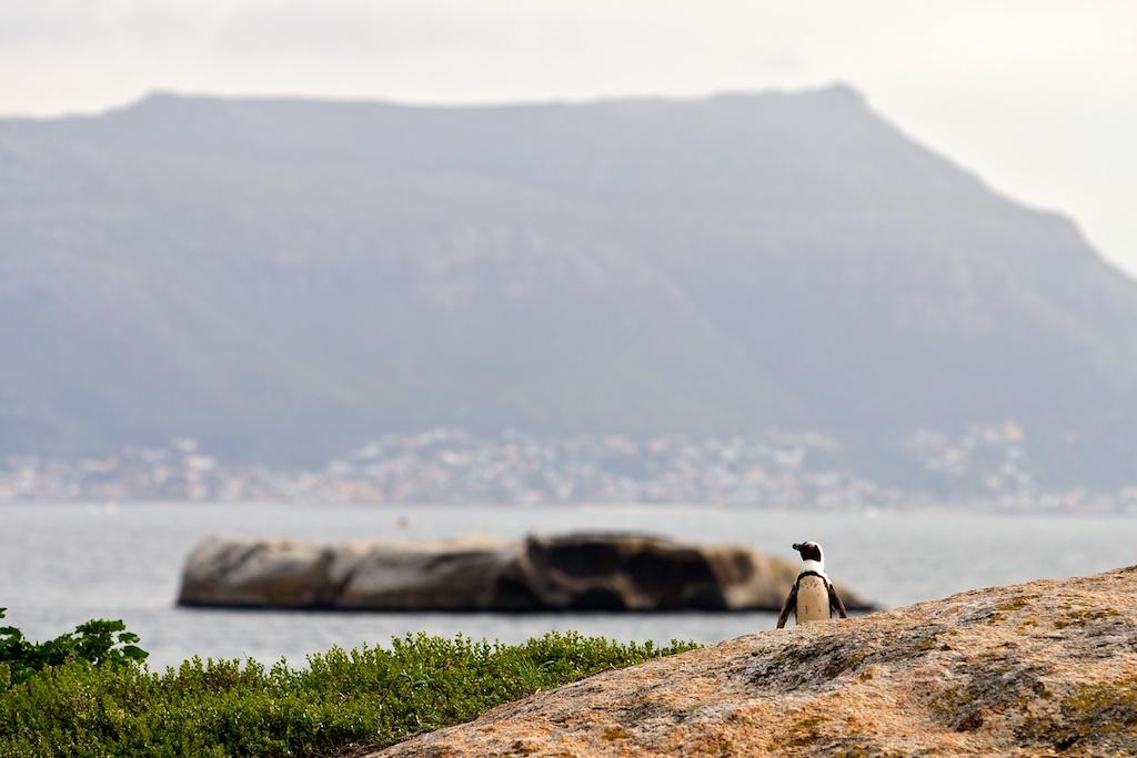T_Steffens_Penguins 7.jpg