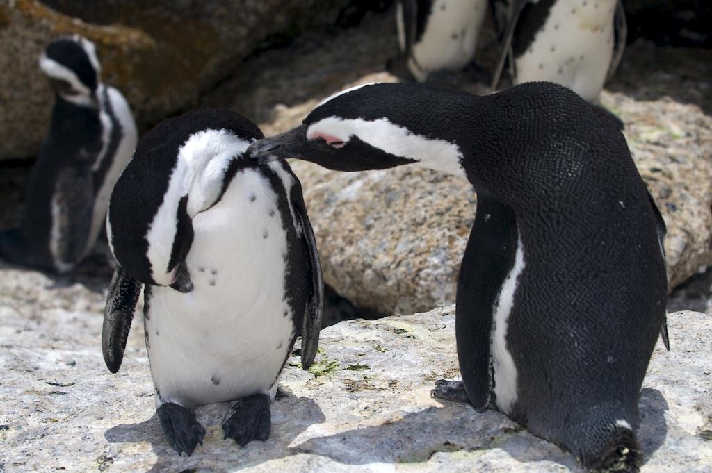 T_Steffens_Penguins 6.jpg