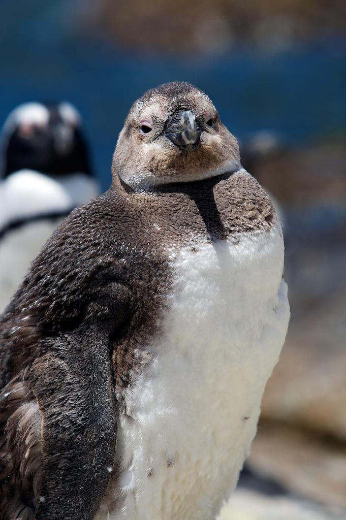 T_Steffens_Penguins 9.jpg