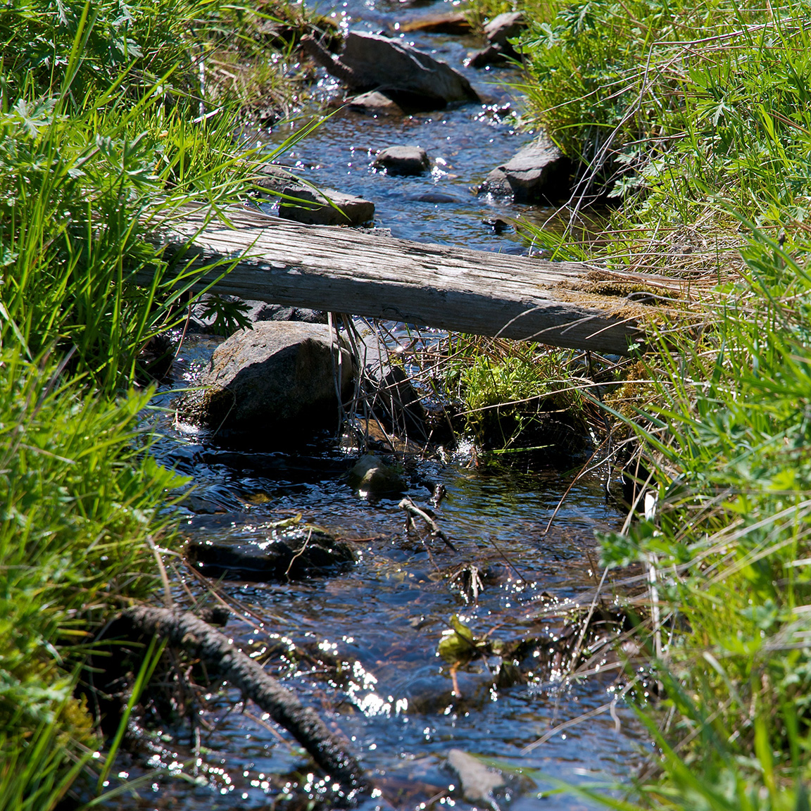 Russian Olive Creek