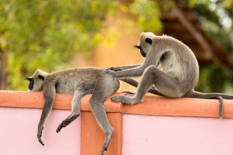 monkeypick.jpg