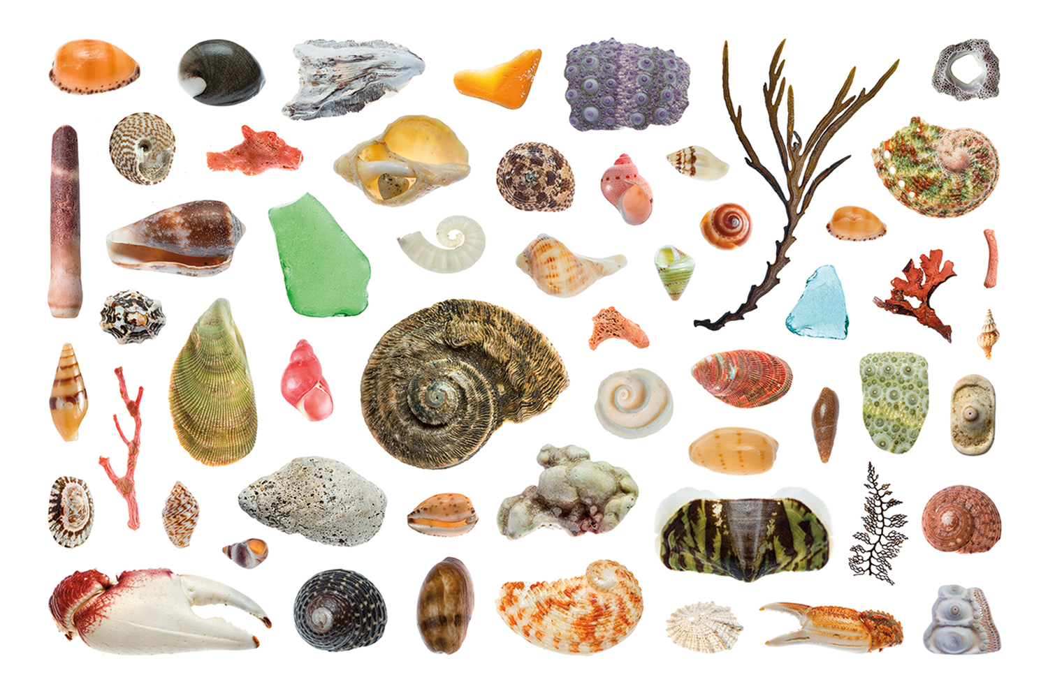 Boat Harbour Shell Collection