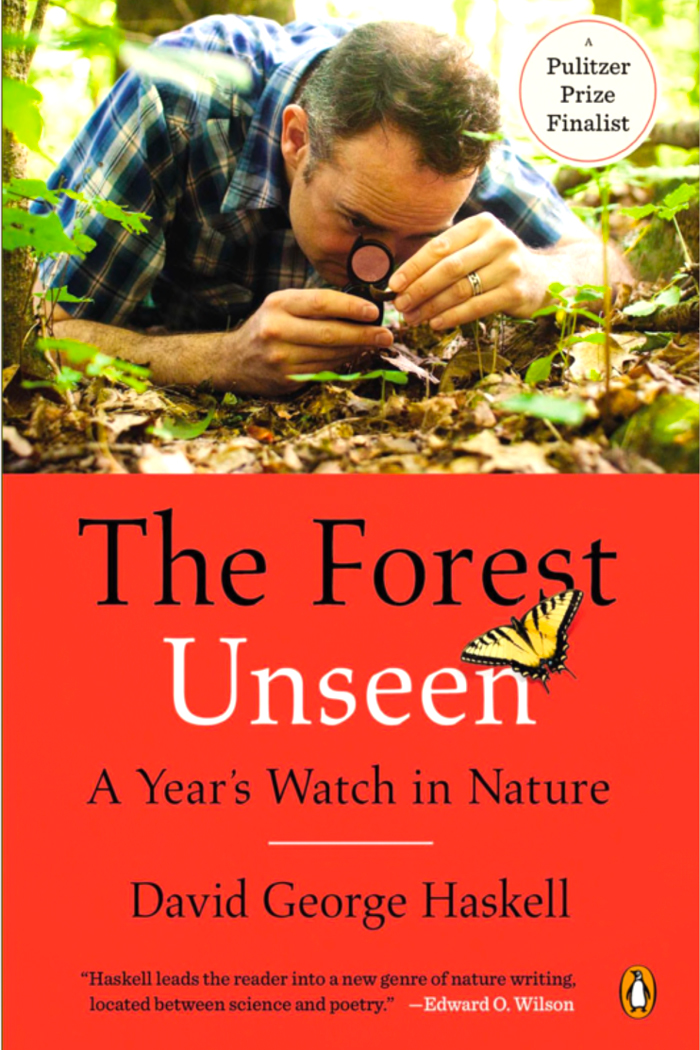 2.3-Forest-Unseen-700W.jpg