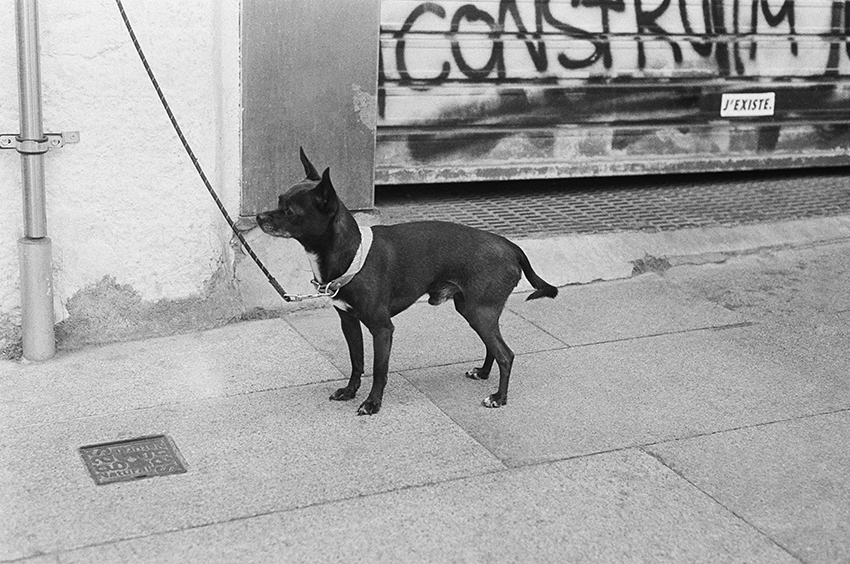Dogs, Barcelona, 2018