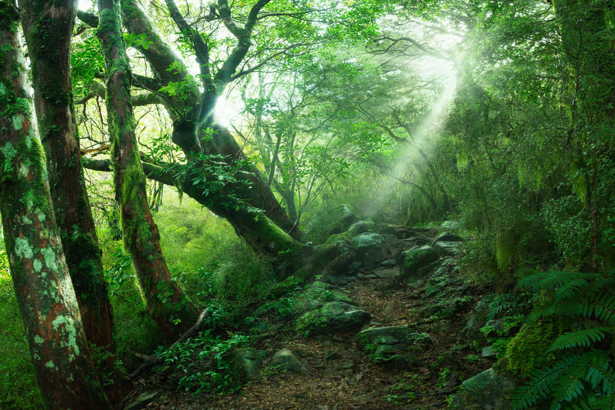 EnchantedForest3x2.jpg