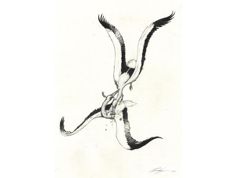 Stork 1.jpg