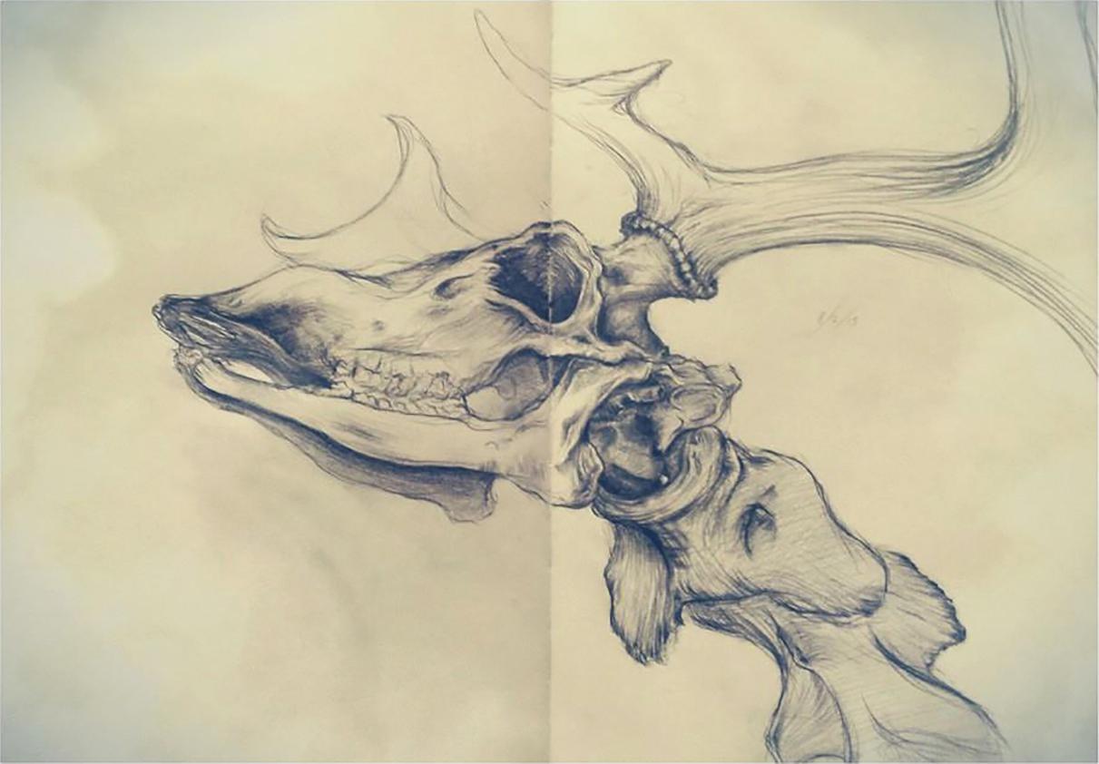 Stag Skeleton.jpg