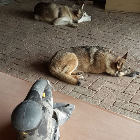 No workshop day is complete without the sleeping WORKSHOP MUTT'S