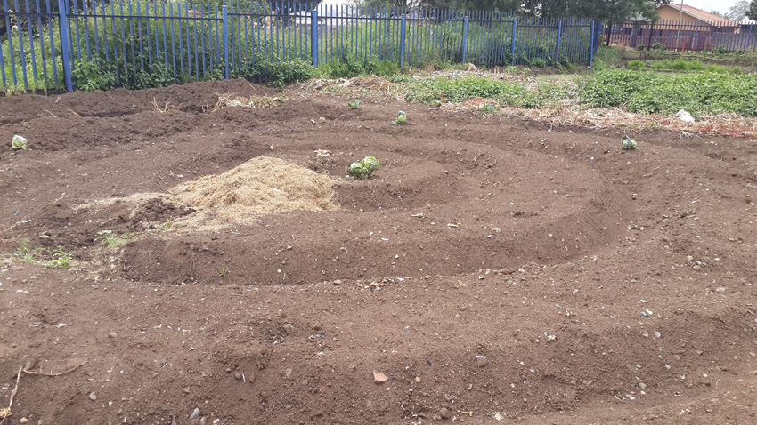 Tshebedisano Primary Schoolhave won awards for their gardens - this is the new one they're laying out for the next competition.