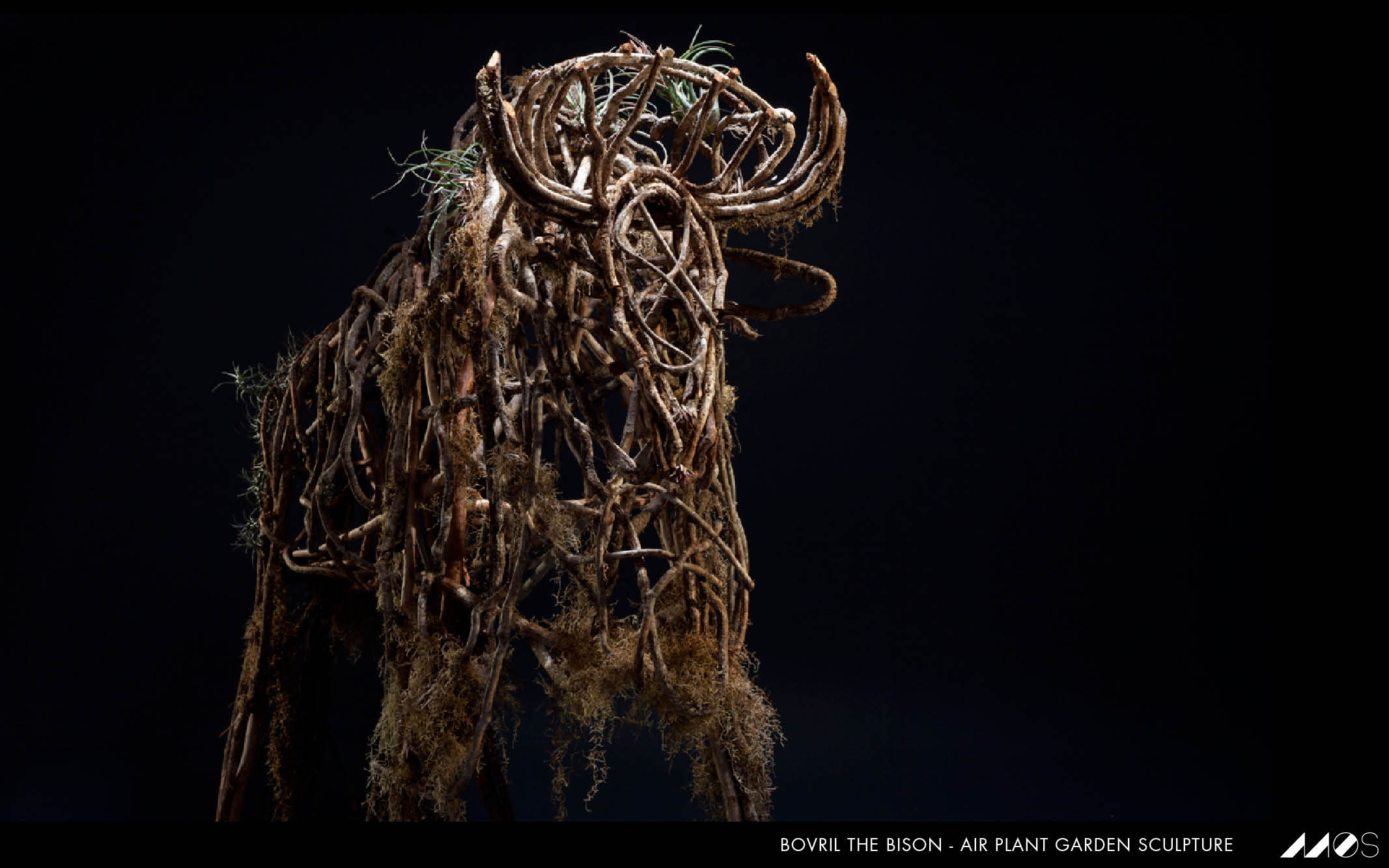MOS bovril the bison.jpg