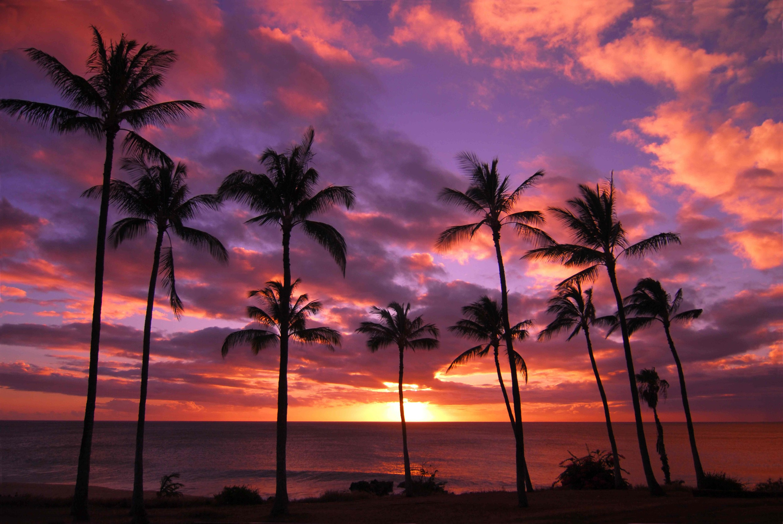 palmtree-sunset_shutterstock_reduced.jpg
