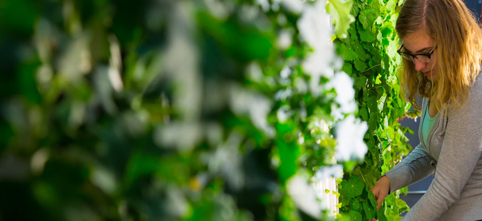 Hi Res Garden.jpg