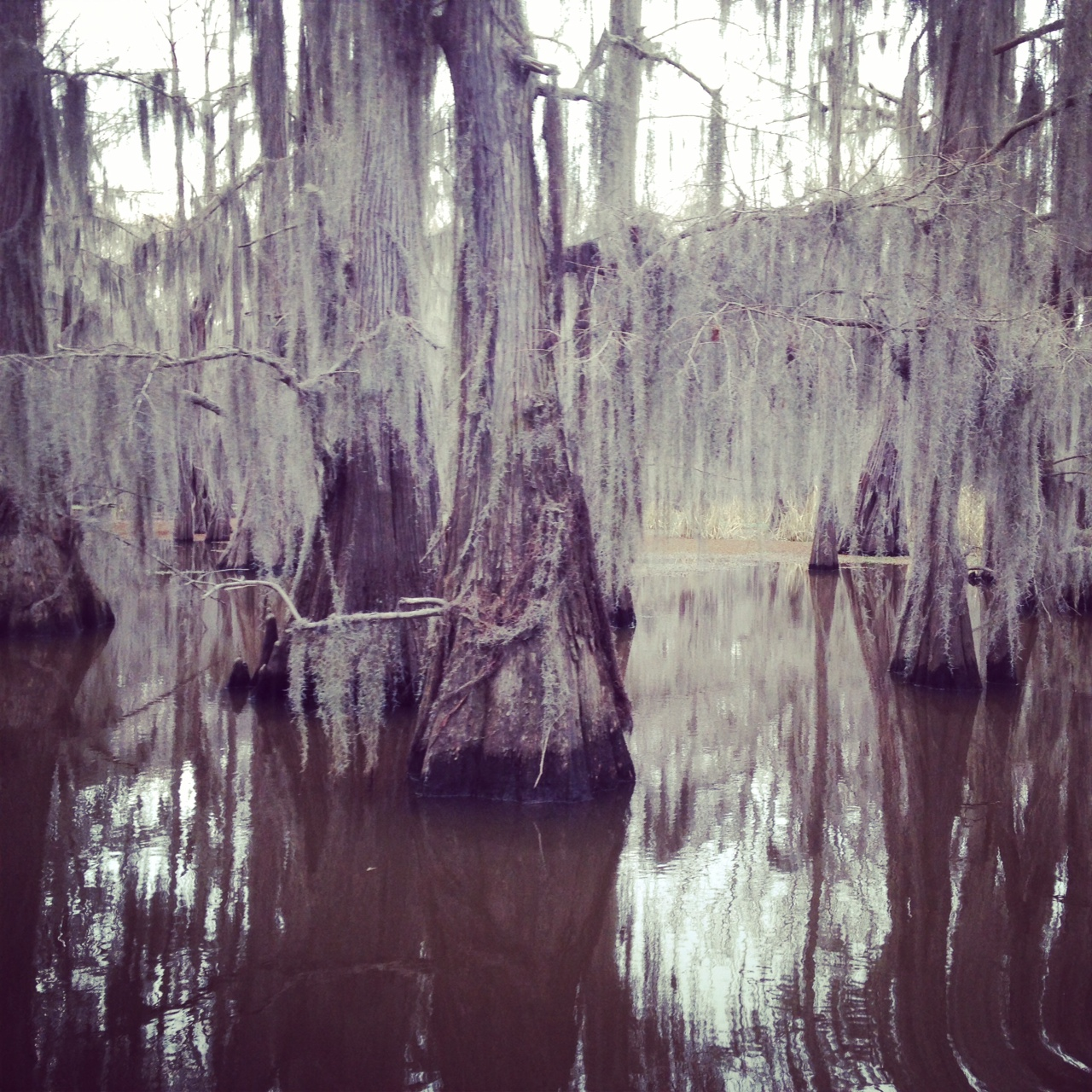 Caddo Lake, March 2014