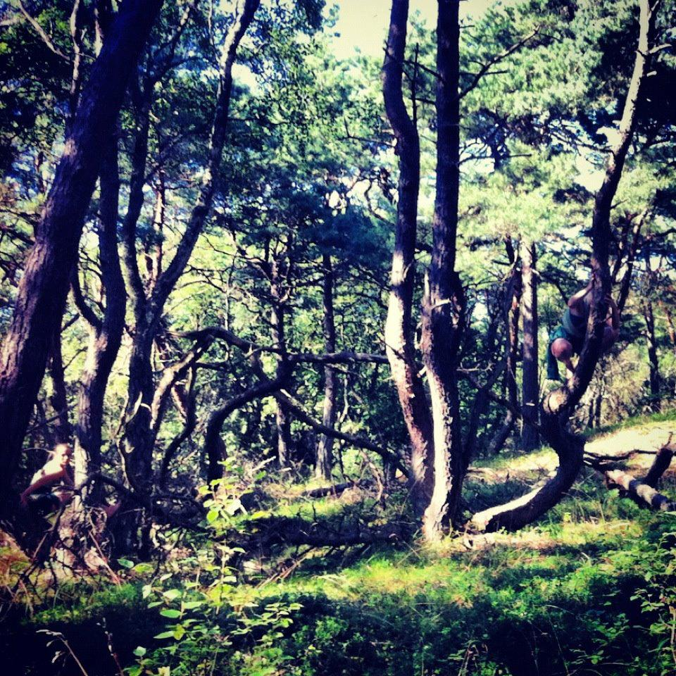 skogsdans.jpg