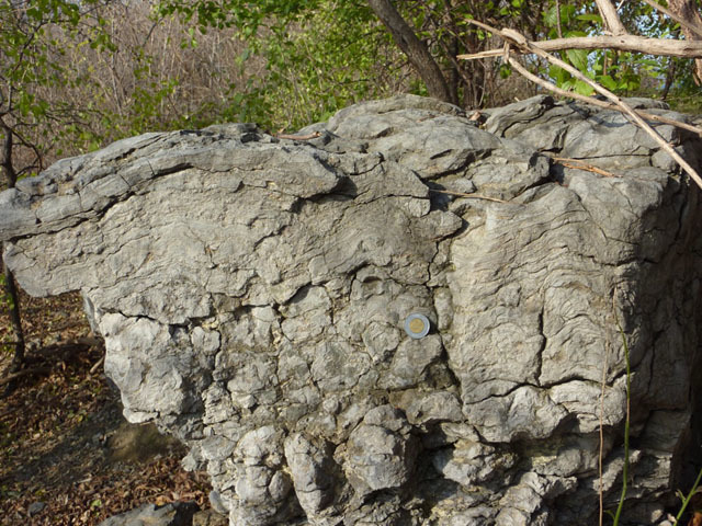 Stromatolites seen in cross-section, Westboro Beach.  Photo by Q. Gall.