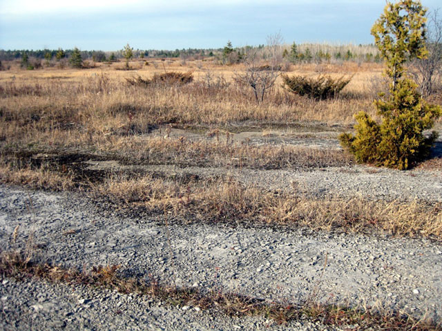 Limestone plain, The Burnt Lands Alvar  Photo by J. Aylsworth