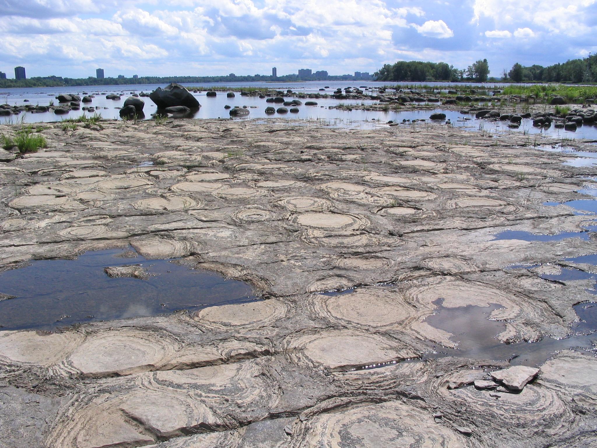 Champlain stromatolites 2