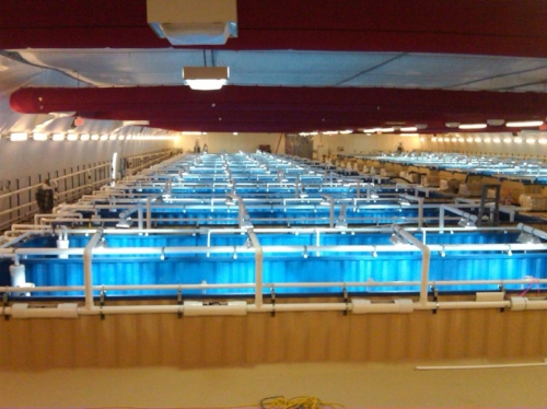 Functioning shrimp farm (we only provided containers, not the water!
