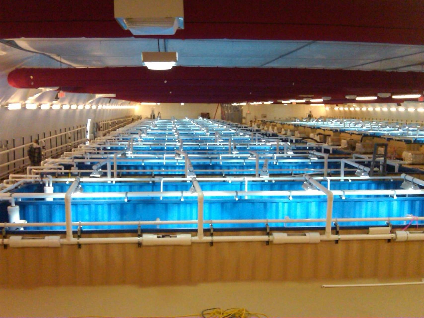 A 50-container shrimp farm we helped with in Los Vegas, NV.
