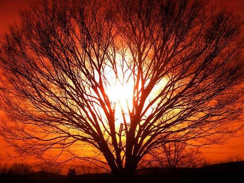 Spirit-of-Nature.jpg