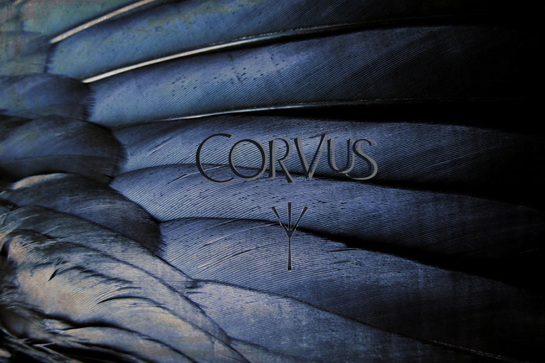 corvus1.jpg