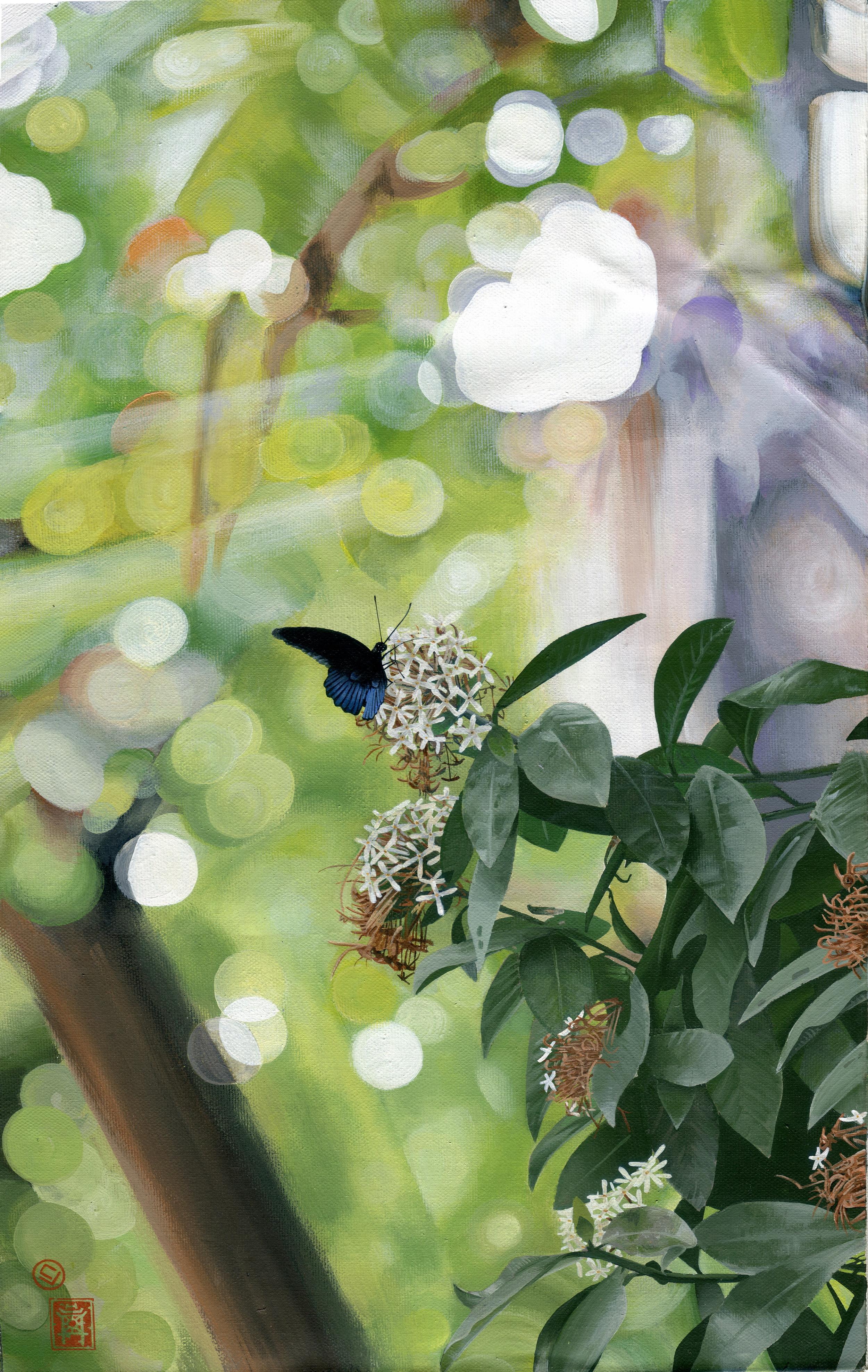 butterfly, Hanoi VN (20x27)
