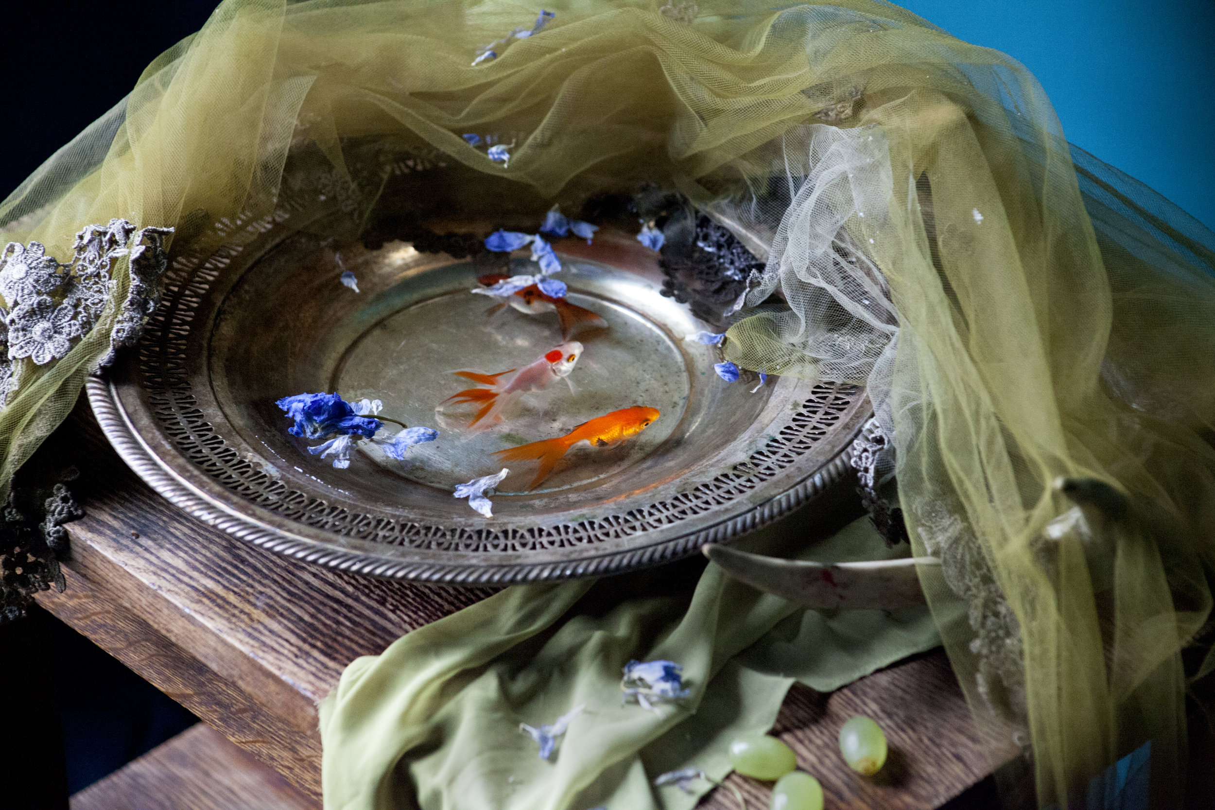 No Goldfish Were Harmed #1