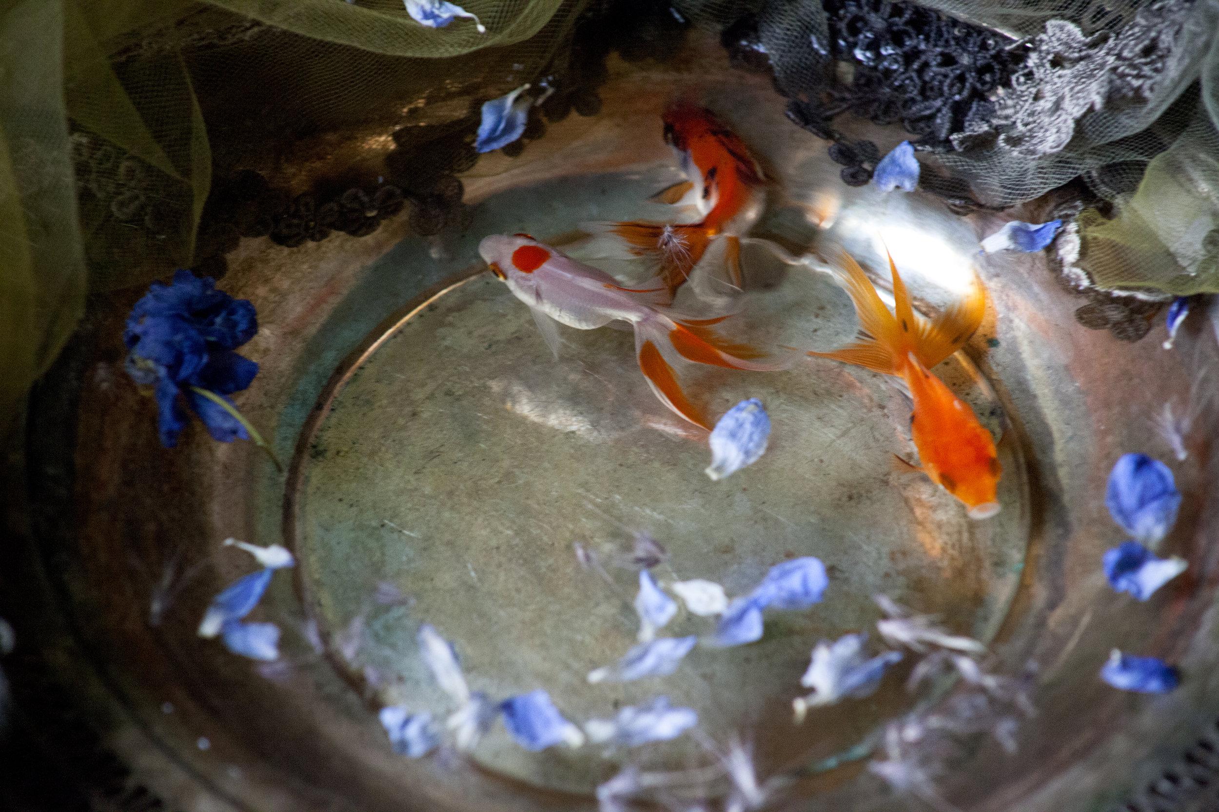 No Goldfish Were Harmed #4
