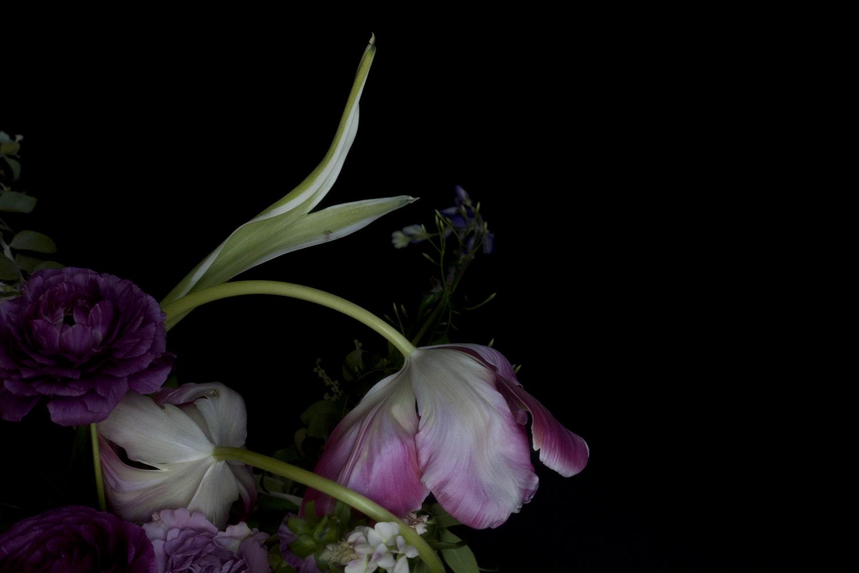 Tulip in Arc