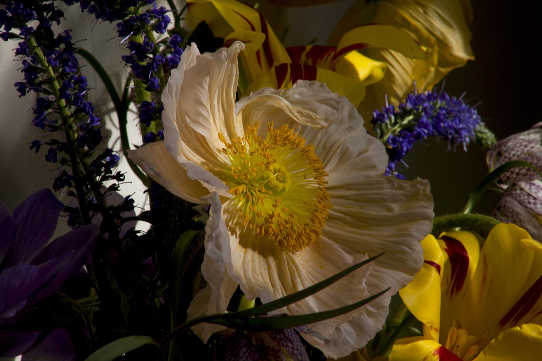 Peonies at Bloom