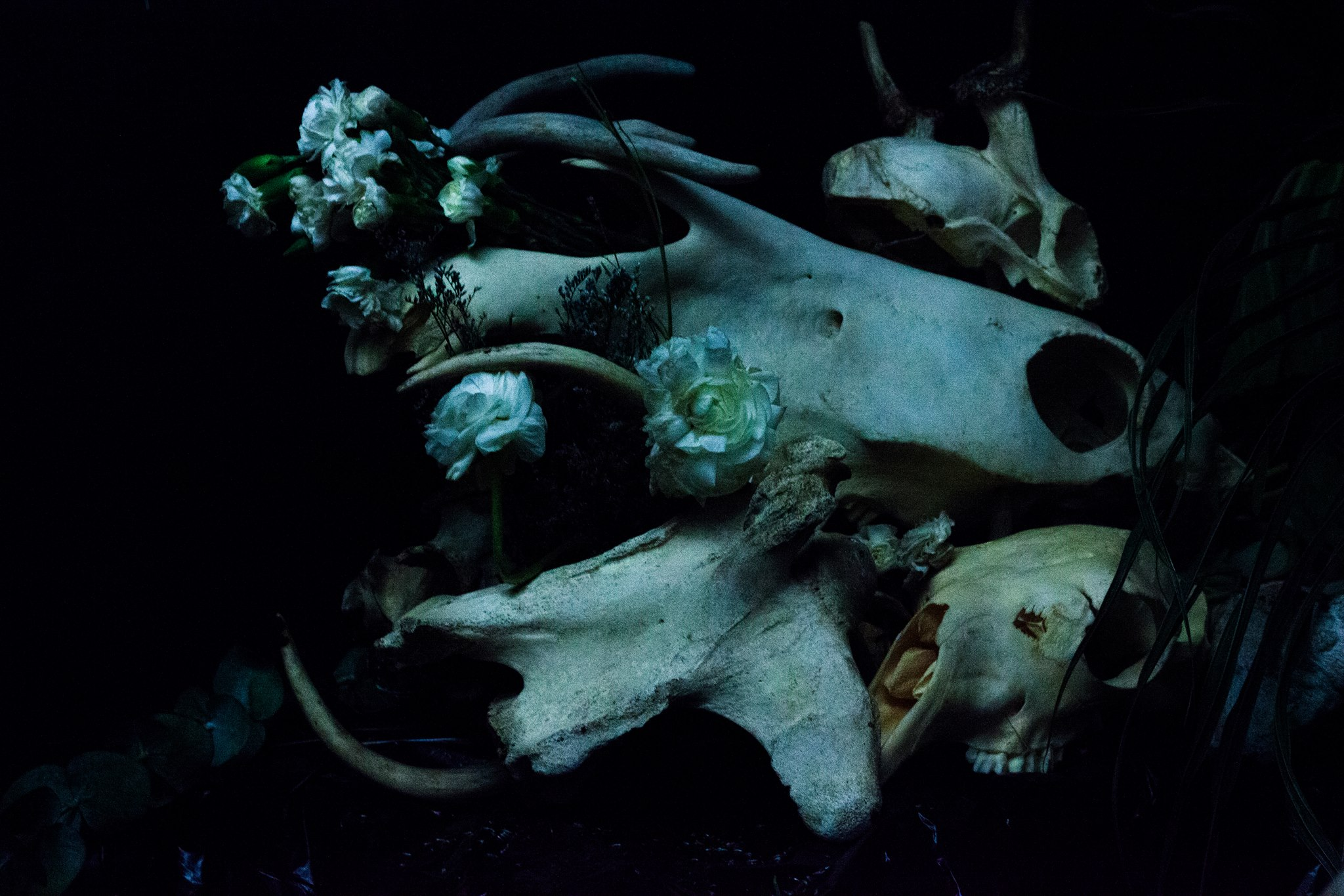 Flowers Blossom Out of Skulls