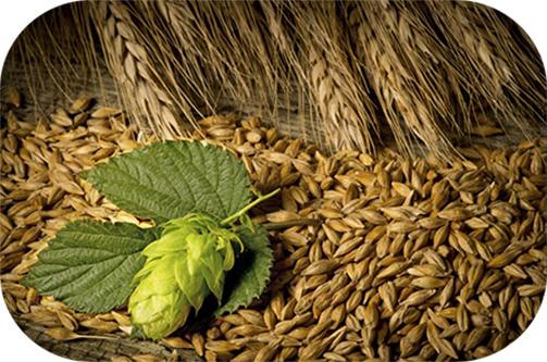 hops-barley2.jpg