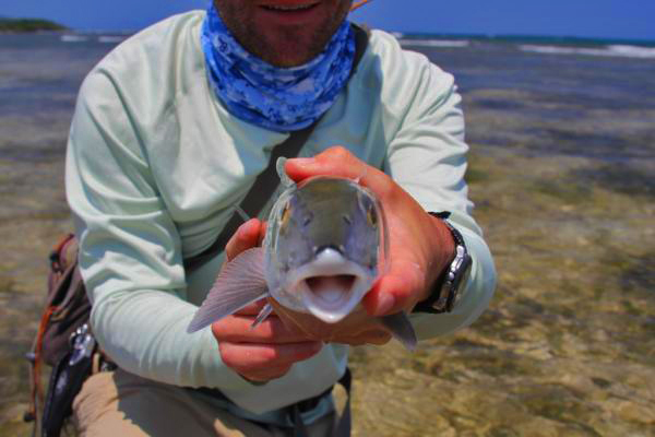 Fly Fish Guanaja