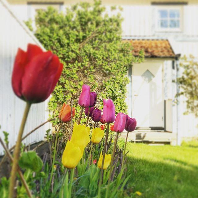 Våren är äntligen här! 🌷Vad kan vara bättre än att möta den på soliga Nordkoster? ☀️#äntligenvår #kosteröarna