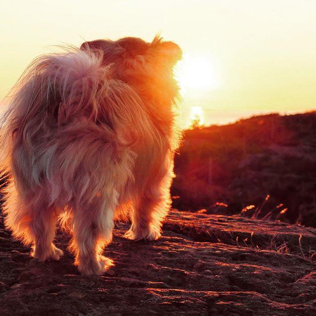 Att beskåda solnedgången från Högen är ett tips vi vill ge till alla Koster-besökare. Stora som små. #svensksommar #nordkoster #Högen #magiskt #solnedgång