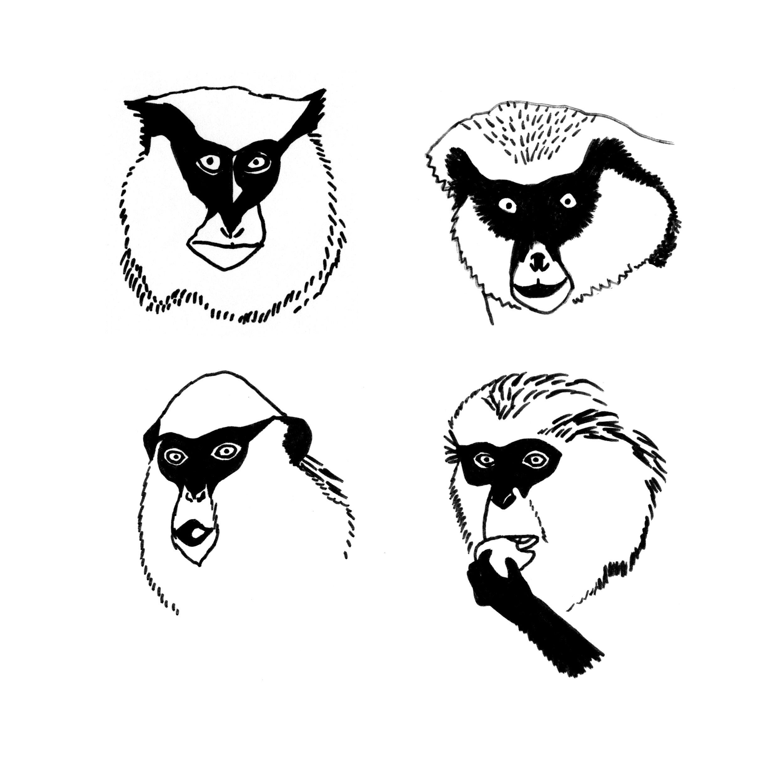 monkey_acp.jpg