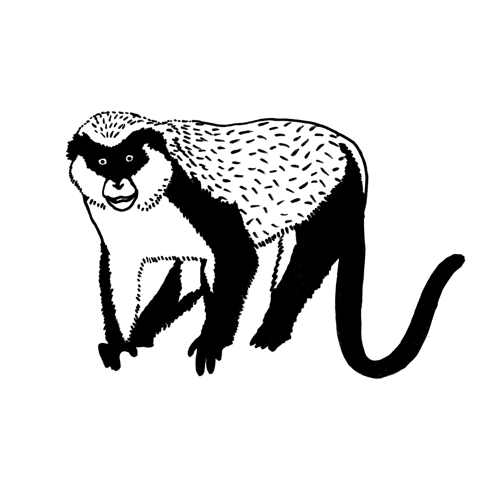 monkey_final.jpg
