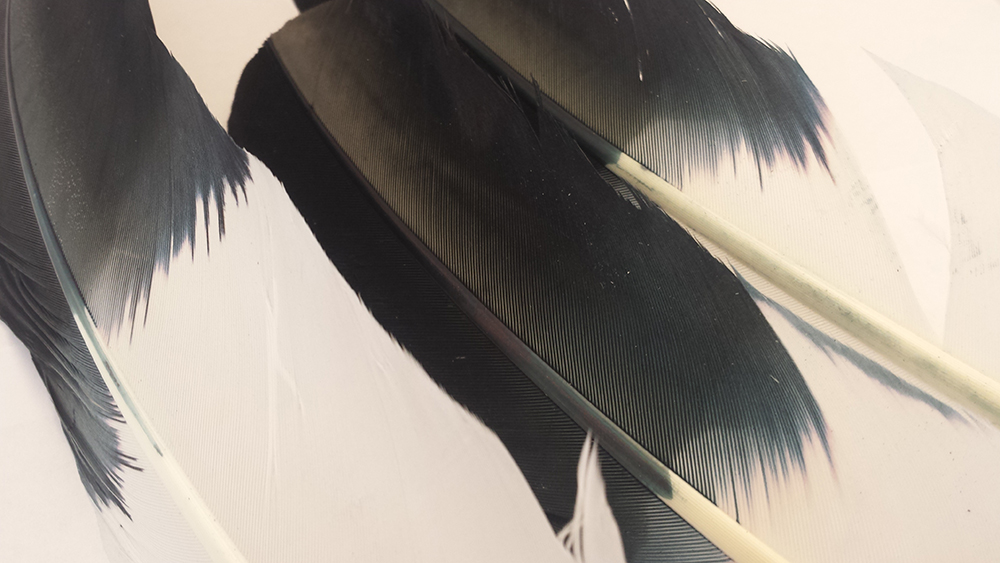 feathers 3.jpg