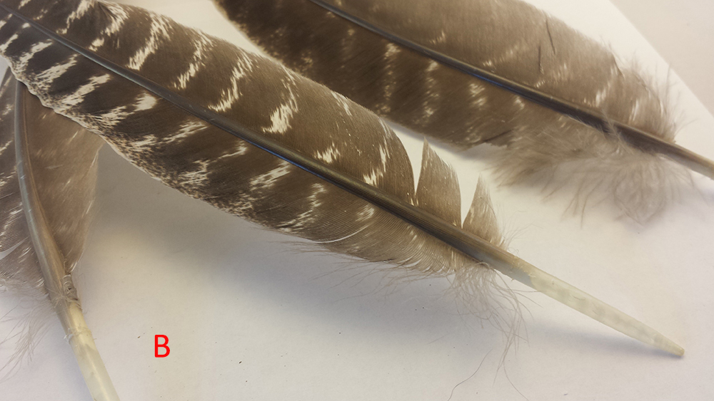 feathers 4.jpg