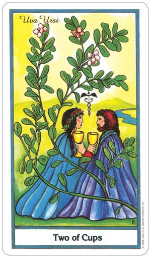 herbal 4.jpg