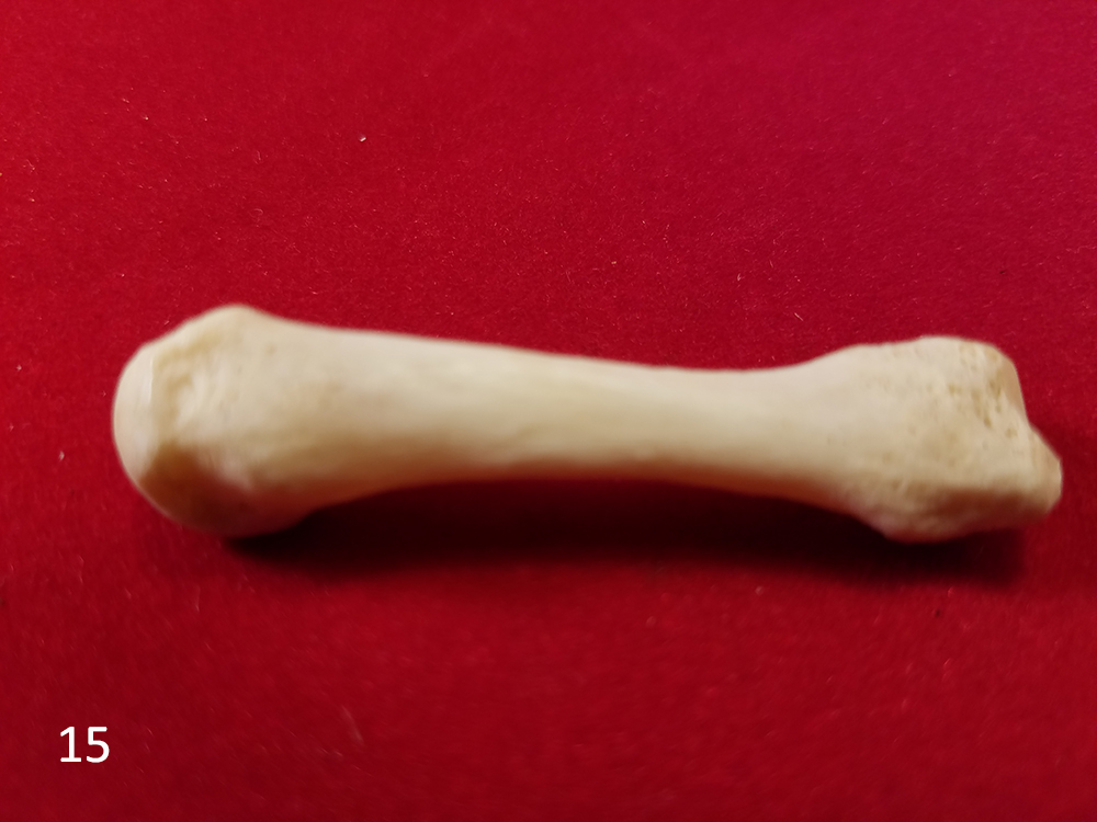 15 human finger.jpg